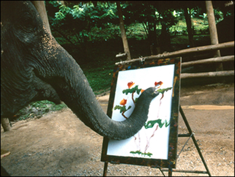 Asian elephant art and conservation project — pic 5